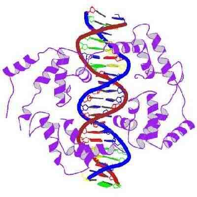 ADN, genética y evolución-Dominio Público